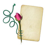 Grunge paper with pink rose and rope Stock Photography