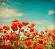 Poppy field against  blue sky. Grunge paper with poppy field against  blue sky Royalty Free Stock Photos