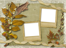 Grunge papers design with foliage Royalty Free Stock Photos