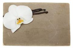 Grunge Papier mit Orchidee- und Vanillebohnen Stockbild