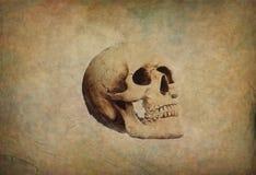 Grunge papier z czaszką Obraz Royalty Free