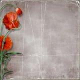Grunge papierowy tło z Makowymi kwiatami Zdjęcie Stock