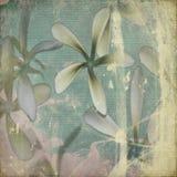 Grunge pastel flower background Royalty Free Stock Photography