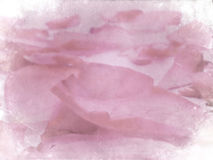 Grunge petals. Pink rose petals, grunge paper background texture Royalty Free Stock Photography