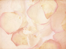 Grunge petals. Rose petals, grunge paper background texture Royalty Free Stock Photography