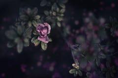 Grunge pink flower Stock Image