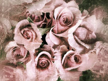 Grunge pink roses Royalty Free Stock Photography