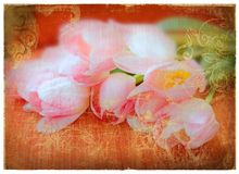 Grunge pink tulips page. Pink tulips on orange grunge paper page background with damaged edges and rich texture Stock Image
