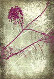 Grunge pink and white blossom branches Stock Images