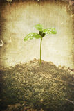 Grunge plant. Conceptual environmental image in grunge style. Green plant growth in soil Stock Photo