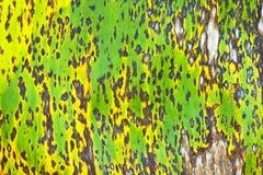 Grunge plant texture Royalty Free Stock Photos