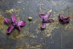 Grunge plant wallpaper Stock Image