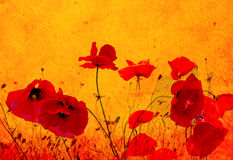 Grunge poppies background Royalty Free Stock Images