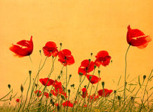 Grunge poppies background Royalty Free Stock Image