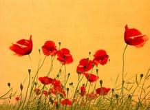Grunge poppies background Royalty Free Stock Image
