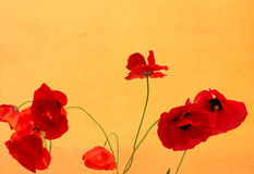 Grunge Poppies Background Royalty Free Stock Photography