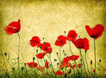 Grunge poppies background Stock Photography