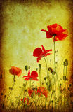 Grunge poppies background Stock Images
