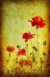 Grunge poppies background royalty free illustration