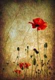 Grunge Poppies Background Stock Photos