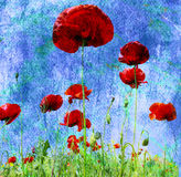 Grunge poppies background Stock Photos