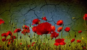 Grunge poppies background Stock Photo