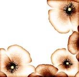 Grunge poppy border Stock Images