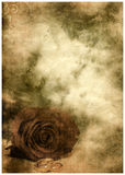 Grunge postcard background with rose Royalty Free Stock Photos