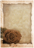 Grunge postcard background with rose Stock Images