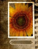 Grunge postcard with sunflower 2 royalty free stock image