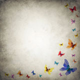Grunge premade background template with butterflies Royalty Free Stock Image
