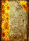 grunge ramowy słonecznik Obrazy Stock
