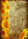 grunge ramowy słonecznik Obrazy Royalty Free