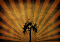 Grunge Rays & Tree Royalty Free Stock Photo