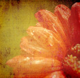 Grunge red flower background Stock Photo