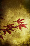 Grunge red leaf. Isolated on a texture Stock Photo