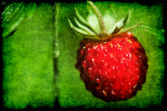 Grunge red strawberry Royalty Free Stock Photo