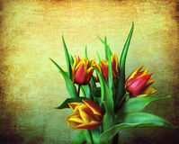 Grunge red and yellow tulips. Floral still life: a bouquet of red and yellow tulips on a vintage background with a grunge texture Stock Image