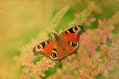 Grunge retro butterfly greeting card. With vintage effect stock photo