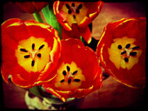 Grunge Rode Tulpen Stock Foto