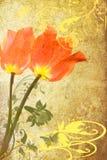 Grunge rojo de dos tulipanes Fotografía de archivo