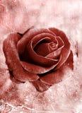 Grunge rose 0801 Royalty Free Stock Images