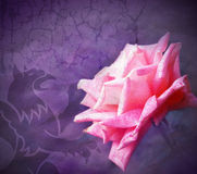 Grunge rose Royalty Free Stock Images