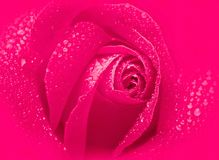 Grunge rose Stock Image