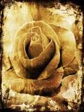 Grunge rose Royalty Free Stock Photos