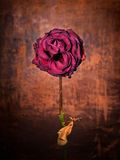 Grunge rose. Grunge wilted rose over old leather background Royalty Free Stock Photo