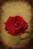 Grunge rose Stock Images