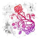 Grunge rose Stock Photos
