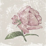Grunge Rose Background del vintage ilustración del vector