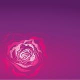 Grunge rose Illustration Stock Image
